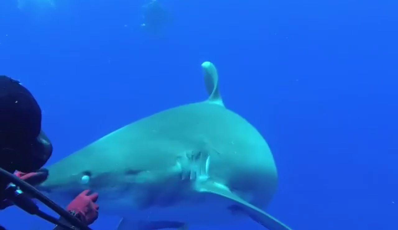 Un buceador se juega la vida para quitar un anzuelo la de la boca de un tiburón