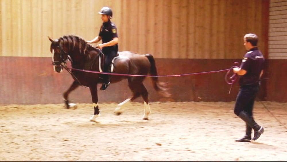 Soy caballo, y soy policía