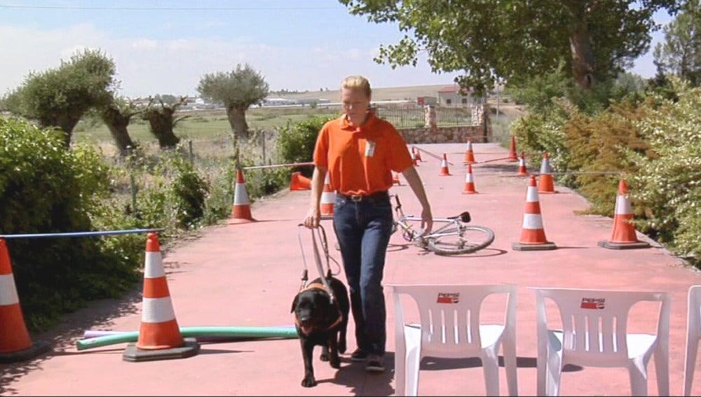 Adiestramiento de perros guía
