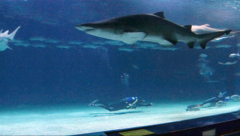 ¡Nadamos con tiburones!