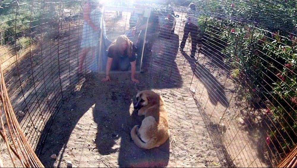 Rescatamos un perro abandonado