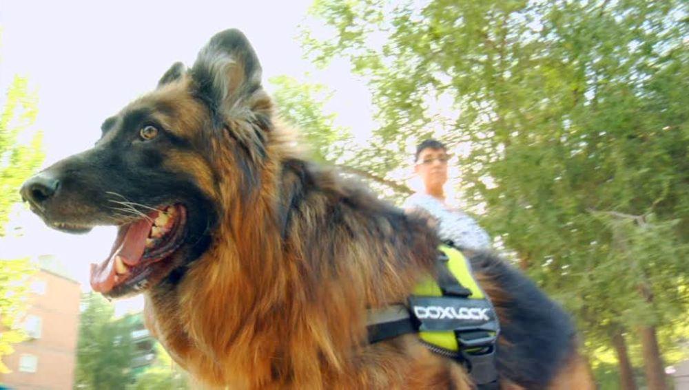 Perros que ayudan a otros perros agresivos
