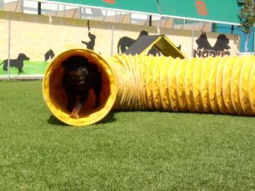 Un centro de adiestramiento canino para los perros más espectaculares