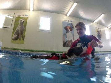 La hidroterapia como forma de rehabilitación canina