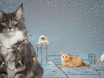 La Navidad llega a Nova