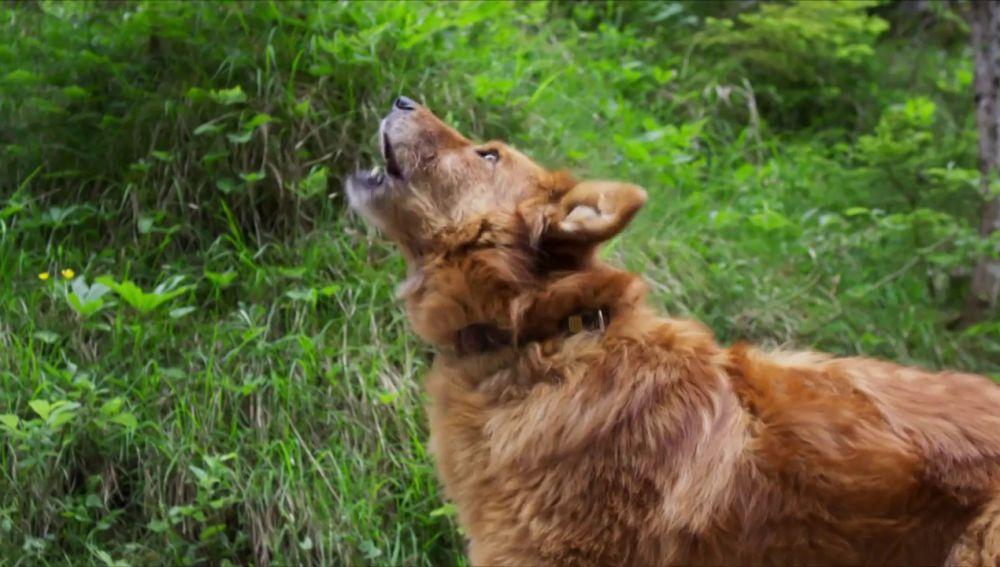 Un perro policía para encontrar a una mujer desaparecida